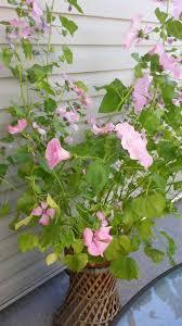 greenhouse gardener top indoor tropical plants identification