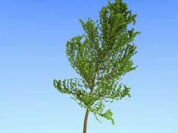 blender 2 59 add on sapling tree animated with wind
