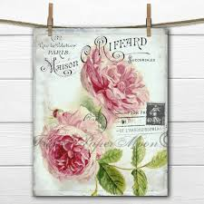 vintage botanical pink roses old fashioned heirloom cottage roses