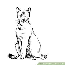 how to draw a siamese cat 7 steps with pictures wikihow