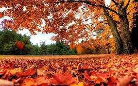 fall backgrounds free download pixelstalk net