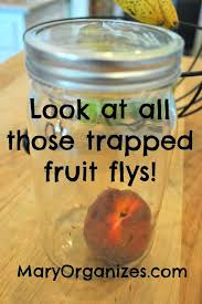fruit flies in sink how to get rid of fruit flies in kitchen get rid of fruit flies in