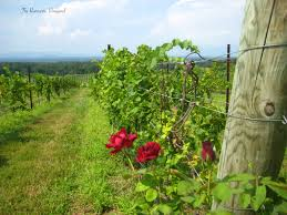 the romantic vineyard a rich harvest of ideas to help your