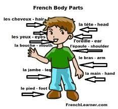 french body parts jpg