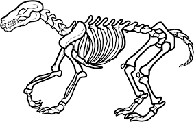 skeleton coloring sheet bebo pandco