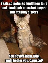 Back Off Meme - now put down your little catnip toy and back off lolcats lol