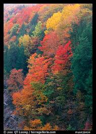 picture photo multicolored trees on hill quechee gorge vermont