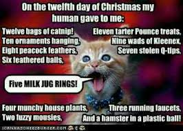 Christmas Cat Memes - post funny picture and memes here page 92 thecatsite