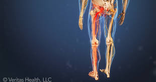 Nerves In The Knee Anatomy Sciatic Nerve Anatomy