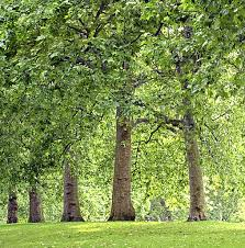 contact tree dimensions spartanburg sc