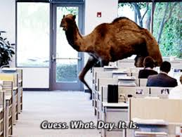 Hump Day Camel Meme - geico camel gifs get the best gif on giphy