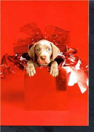 weimaraner owners lovers cute christmas cards by artist william