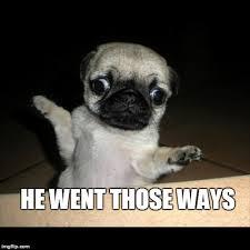 Funny Pug Memes - pug imgflip