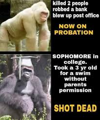 Gorilla Meme - zoo stop making memes of our dead gorilla aka the real life