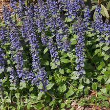 native georgia plants water u0026 pond plants garden plants u0026 flowers the home depot