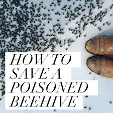 How To Get Rid Of A Beehive In Your Backyard Beekeeping Like A How To Save A Poisoned Beehive