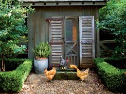 raising chickens in the south southern living