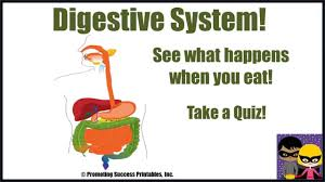 digestive system human body science video for middle