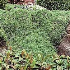 ground cover full sun garden design garden design with full sun