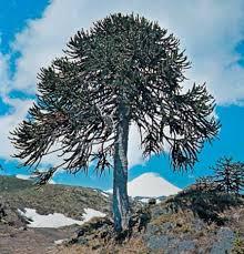 tree plant britannica com