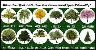 what does your birth month tree reveal about your personality