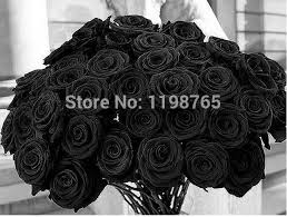 flowers free shipping 100pcs 100 original black seeds china seeds of