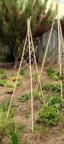 bamboo u0026 twine tomato cage trellis cedros gardens solana beach ca