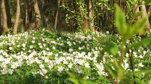 beautiful nature video u0026 relaxing music flowers hd youtube