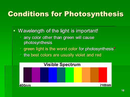 worst colors cell energy photosynthesis and respiration ppt video online download