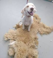 groomer ruth pet salon home facebook