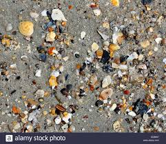assorted seashells assorted small broken seashells on sand stock photo royalty