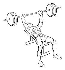 bench press everkinetic