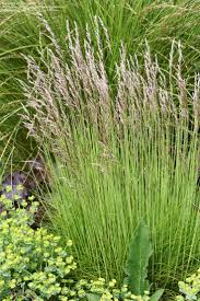 20 best plants screening bed images on gardens
