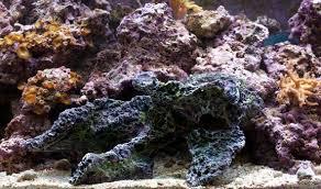 Live Rock Aquascaping Ideas Aquarium Decorations Rocks U0026driftwood Caribbean Live Rock 3