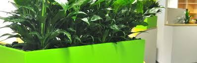 best indoor plants for office u2013 adammayfield co