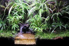2 ft vivarium aquaticquotient com photo gallery