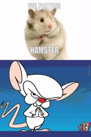Rodent Meme - it s a rodent thing by princessmangotree meme center