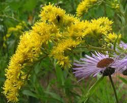 canadian native plants nursery u2014 wintercreek restoration u0026 nursery