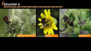 best native plants why planting native matters six reasons why native butterfly bird