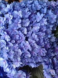 wholesale flowers near me 59 best flower varieties blue flowers images on blue