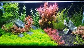 led reef lighting reviews best led lights for planted tank 2018 reviews top picks guide