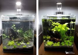 Wohnzimmertisch Aquarium Tisch Aquarium Kaufen Kleine Fische Für Aquarium Kaufen Fish