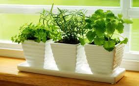 indoor kitchen garden ideas indoor kitchen herb garden riothorseroyale homes how to make