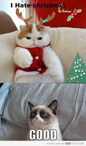 Anti Christmas Meme - 147 best animals christmas images on pinterest christmas cats