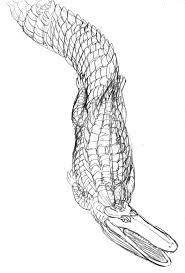 sketch stomatosuchus inermisv2 by avancna on deviantart