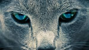 50 amazing wildlife u0026 animal wallpapers hongkiat