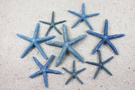 starfish decorations blue starfish when you need something blue for your