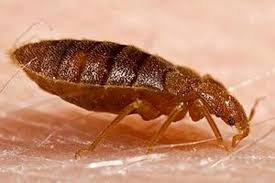 Do Bed Bugs Jump From Person To Person Bed Bugs On Airplanes Yikes How To Fly Bed Bug Free