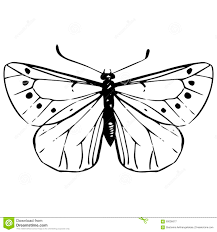 hand drawn butterfly stock vector image 60036677
