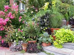 Potted Plants For Patio How Not To Kill Plants In Containers 13 Most Important Things To